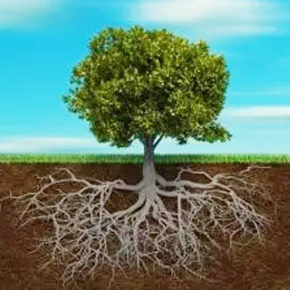 植物根系结构示意图