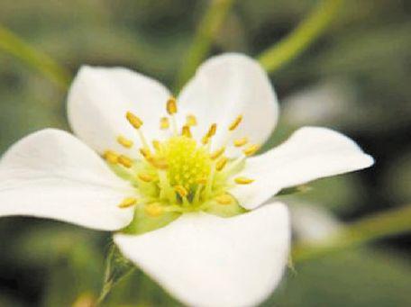 果树补好钾 效益不会差 - 平阴玫瑰甲天下 - 我心永恒博客乐园 平阴玫瑰甲天下