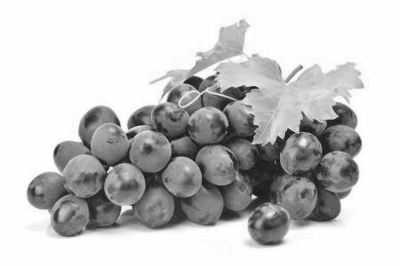 葡萄常用贮藏保鲜方法 - 平阴玫瑰甲天下 - 我心永恒博客乐园 平阴玫瑰甲天下