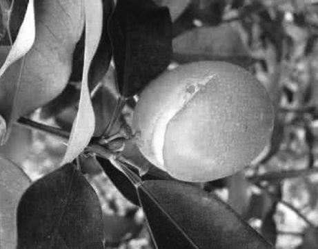 高温天气柑橘如何预防裂果 - 平阴玫瑰甲天下 - 我心永恒博客乐园 平阴玫瑰甲天下